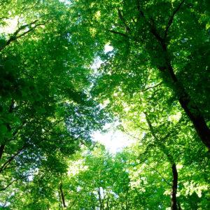 Naturcoaching Wald